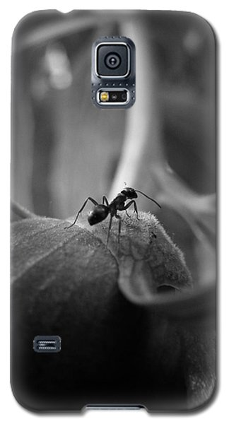 An Ant's Life Galaxy S5 Case