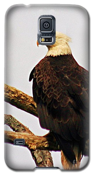 Galaxy S5 Case featuring the photograph An Eagle's Perch by Polly Peacock