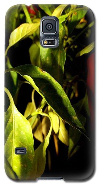 Anaheim Pepper Galaxy S5 Case