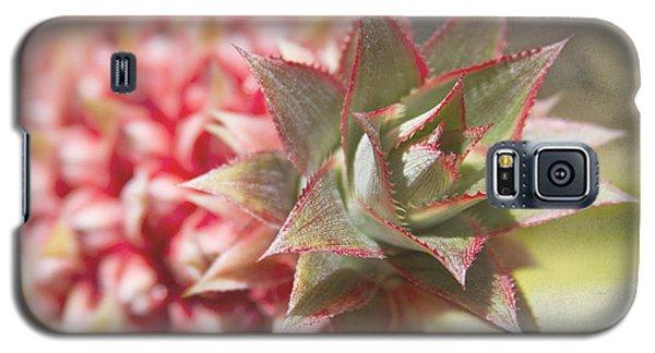 Ananas Comosus - Pink Ornamental Pineapple Galaxy S5 Case by Sharon Mau