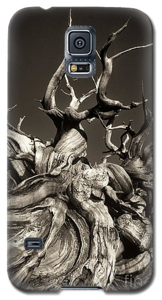 Ancient Bristlecone Pine In Black And White Galaxy S5 Case