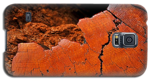 Galaxy S5 Case featuring the photograph Ancient Log by Crystal Hoeveler