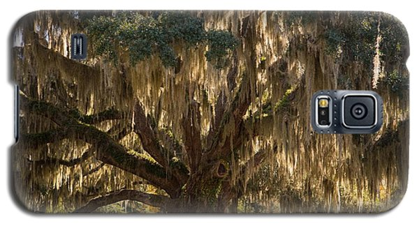 Ancient Oak 1 Galaxy S5 Case