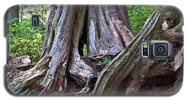 Ancient Rainforest Cedar Trees Galaxy S5 Case