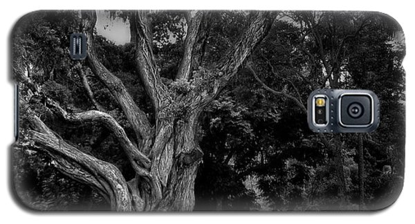 Ancient Tree Galaxy S5 Case