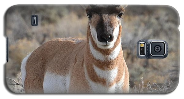 ...and The Antelope Play Galaxy S5 Case