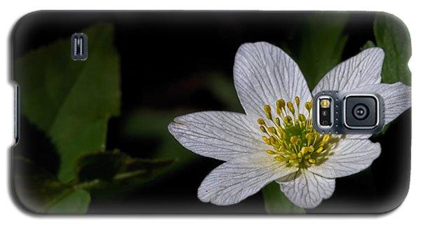 Anemone Nemorosa  By Leif Sohlman Galaxy S5 Case by Leif Sohlman