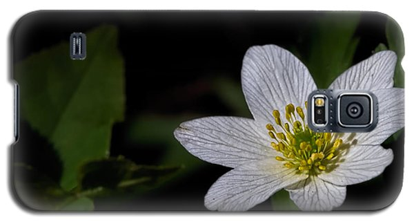 Anemone Nemorosa  By Leif Sohlman Galaxy S5 Case
