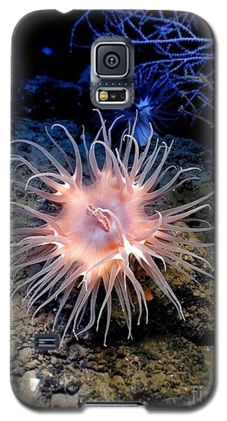 Galaxy S5 Case featuring the photograph Anemone Sea Life Sea Ocean Water Underwater by Paul Fearn