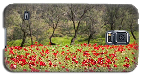 At Ruchama Forest Israel Galaxy S5 Case by Dubi Roman