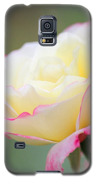 Angel Of Roses Galaxy S5 Case by The Art Of Marilyn Ridoutt-Greene
