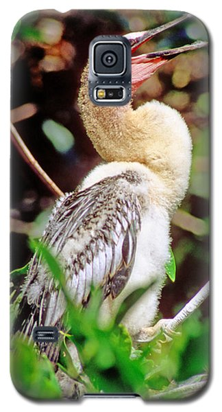Anhinga Anhinga Anhinga Nestling Galaxy S5 Case