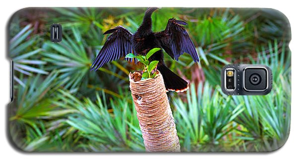 Anhinga Anhinga Anhinga On A Tree Galaxy S5 Case by Panoramic Images