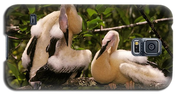 Anhinga Chicks Galaxy S5 Case by Ron Sanford