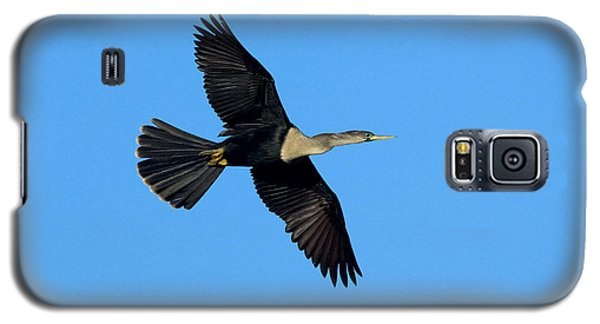 Anhinga Female Flying Galaxy S5 Case by Anthony Mercieca