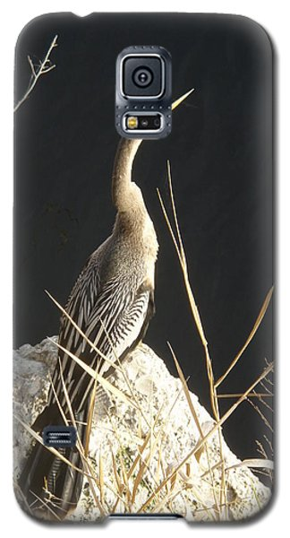 Galaxy S5 Case featuring the photograph Anhinga by Robert Nickologianis
