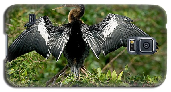 Anhinga Sunning Galaxy S5 Case by Anthony Mercieca