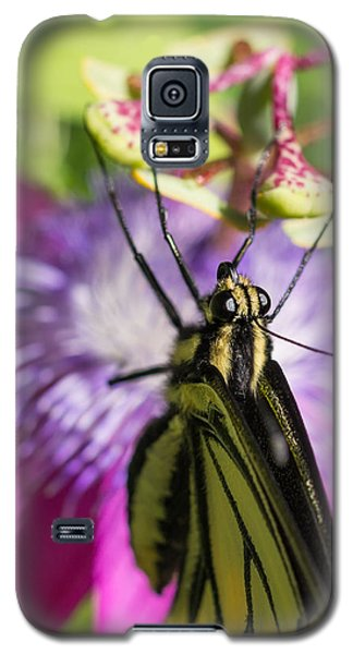 Galaxy S5 Case featuring the photograph Anise Swallowtail Butterfly And Passionflower by Priya Ghose