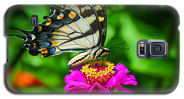 Anise  Swallowtail Butterfly Galaxy S5 Case
