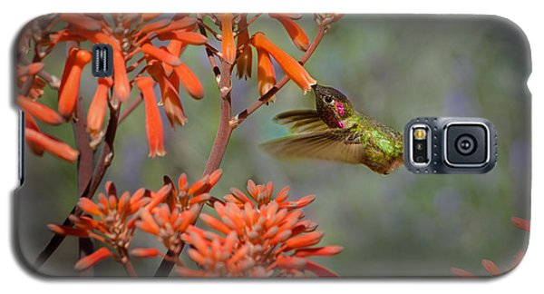 Anna's Hummingbird Galaxy S5 Case by Linda Villers