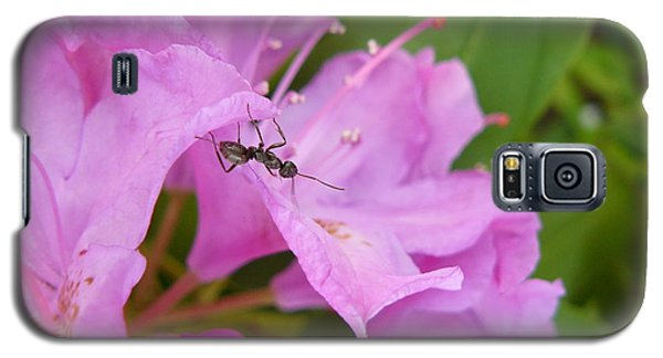 Ant On Flower Galaxy S5 Case