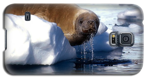 Galaxy S5 Case featuring the photograph Antarctic Crabeater Seal by Dennis Cox WorldViews