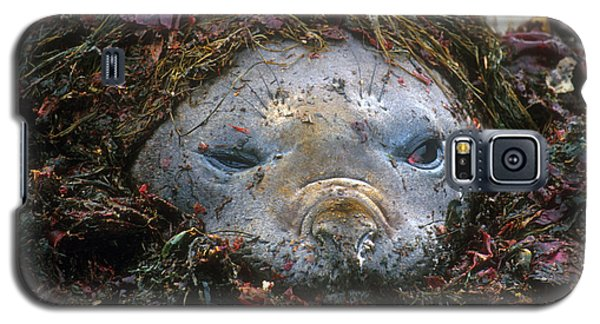 Galaxy S5 Case featuring the photograph Antarctic Elephant Seal by Dennis Cox WorldViews