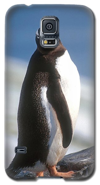 Galaxy S5 Case featuring the photograph Antarctic Gentoo Penguin by Dennis Cox