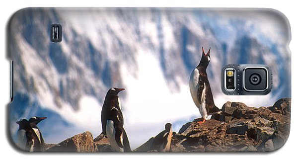 Galaxy S5 Case featuring the photograph Antarctic Gentoo Penguins by Dennis Cox WorldViews
