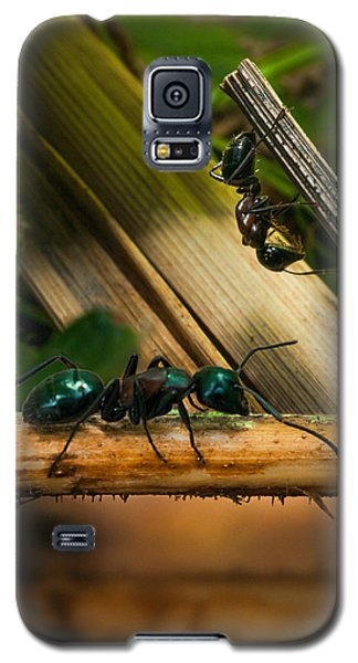 Ants Adventure 2 Galaxy S5 Case by Bob Orsillo