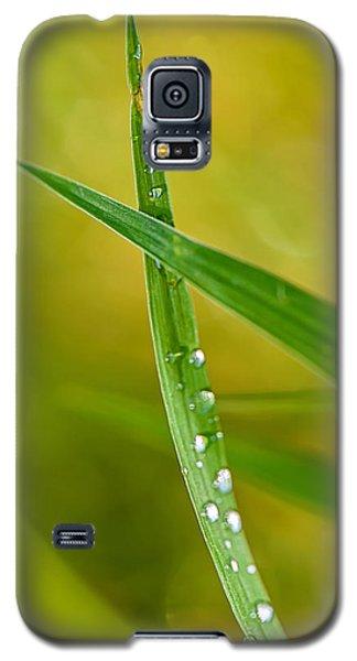 Ants Eye View Galaxy S5 Case