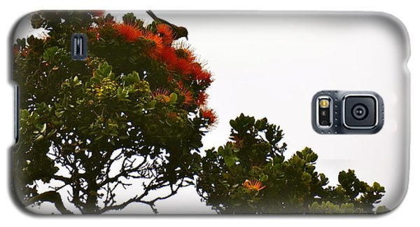 Apapane Atop An Orange Ohia Lehua Tree  Galaxy S5 Case by Lehua Pekelo-Stearns