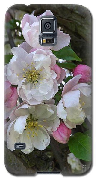 Apple Blossom Bouquet Galaxy S5 Case by Sara  Raber