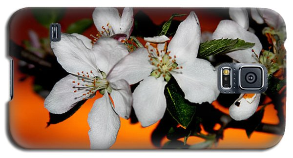 Apple Blossom Sunrise I Galaxy S5 Case