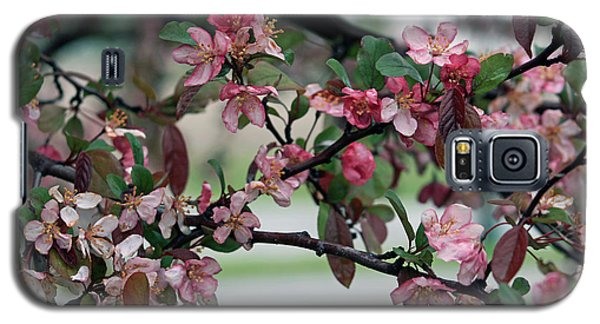 Galaxy S5 Case featuring the photograph Apple Blossom Time by Kay Novy