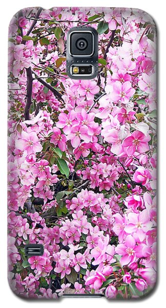 Apple Blossoms Galaxy S5 Case by Aimee L Maher Photography and Art Visit ALMGallerydotcom