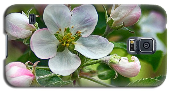 Apple Blossom And Buds Galaxy S5 Case