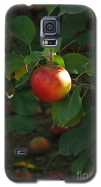 Galaxy S5 Case featuring the photograph Apple On Tree by Kathy Gibbons