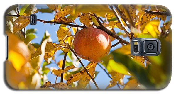 Apple Picking Galaxy S5 Case