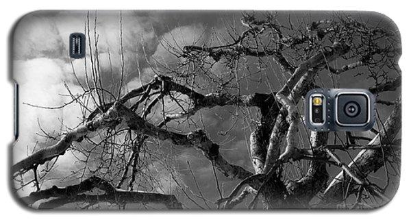 Apple Tree Bw Galaxy S5 Case