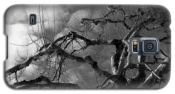 Apple Tree Bw Galaxy S5 Case