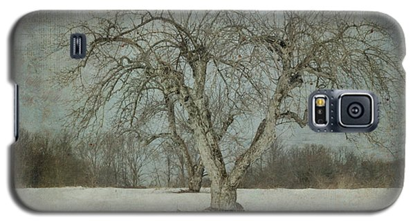 Apple Tree In Winter Galaxy S5 Case by Vicki DeVico