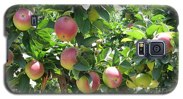 Apples At Gizdich Galaxy S5 Case