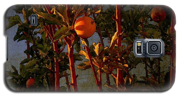 Galaxy S5 Case featuring the photograph Apples by Timothy Bulone