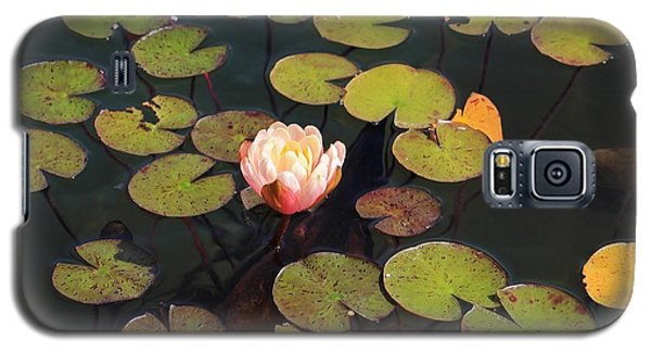 Aquatic Garden With Water Lily Galaxy S5 Case