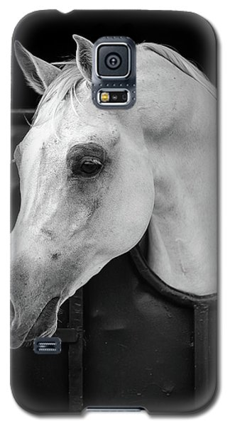 White Horse Galaxy S5 Case - Arabian Horse by Waseem Al-hammad