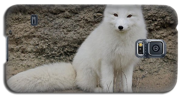 Arctic Fox Galaxy S5 Case by Athena Mckinzie