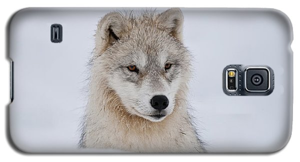 Arctic Pup In Snow Galaxy S5 Case by Wolves Only