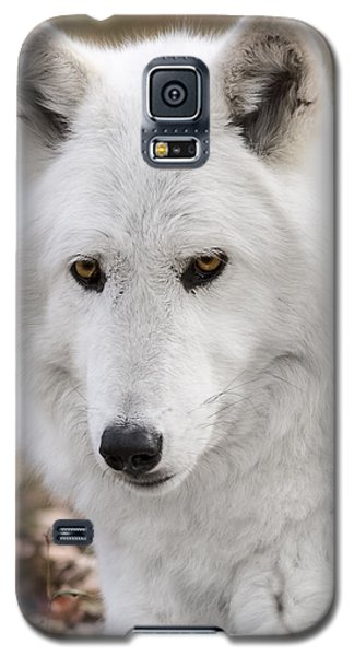 Arctic Wolf Galaxy S5 Case by Eduard Moldoveanu