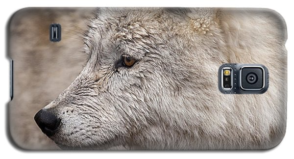 Arctic Wolf Galaxy S5 Case by Eunice Gibb